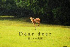 佐藤和斗写真集「Dear deer ~鹿たちの楽園~」好評販売中