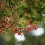 【満席】11/25(土)開催*SHA.sha.PAKU vol.44「たかばたけ 紅葉狩り♪」