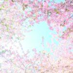 【募集締切りました】*むらいさち先生の初夏のふんわり花フォトレッスンandトークショー*