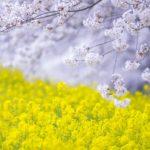 *満席*3/30(土)開催*SHA.sha.PAKU vol.60「ナイショの穴場でパステルカラーの春を撮ろう♪」