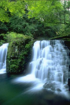 【募集告知】5/18(土)開催*SHA.sha.PAKU vol.62「新緑かがやく赤目四十八滝を撮ろう♪」