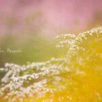 【満席】4/13(火)開催*SHA.sha.PAKU vol.85「春のお花に囲まれたいっ♪」