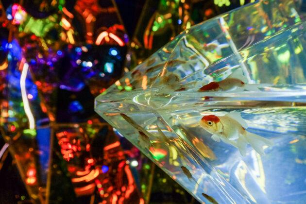 *SHA.sha.PAKU vol.88「奈良金魚ミュージアムのアートアクアリウムを撮ろう♪」